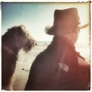 airedale-at-the-beach